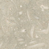 Fossil Limestone / Seagrass - honed