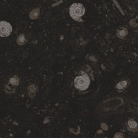 Fossil Brown / Pietra di Erfoud - lether